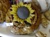 Kwiat słonecznika kolor
